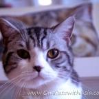 B Cat Cafe – Phuket Town, Thailand
